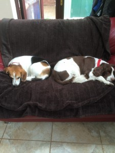 Betty and Zeb enjoying a rest after their morning walk